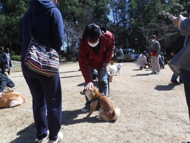 9柴犬.JPG